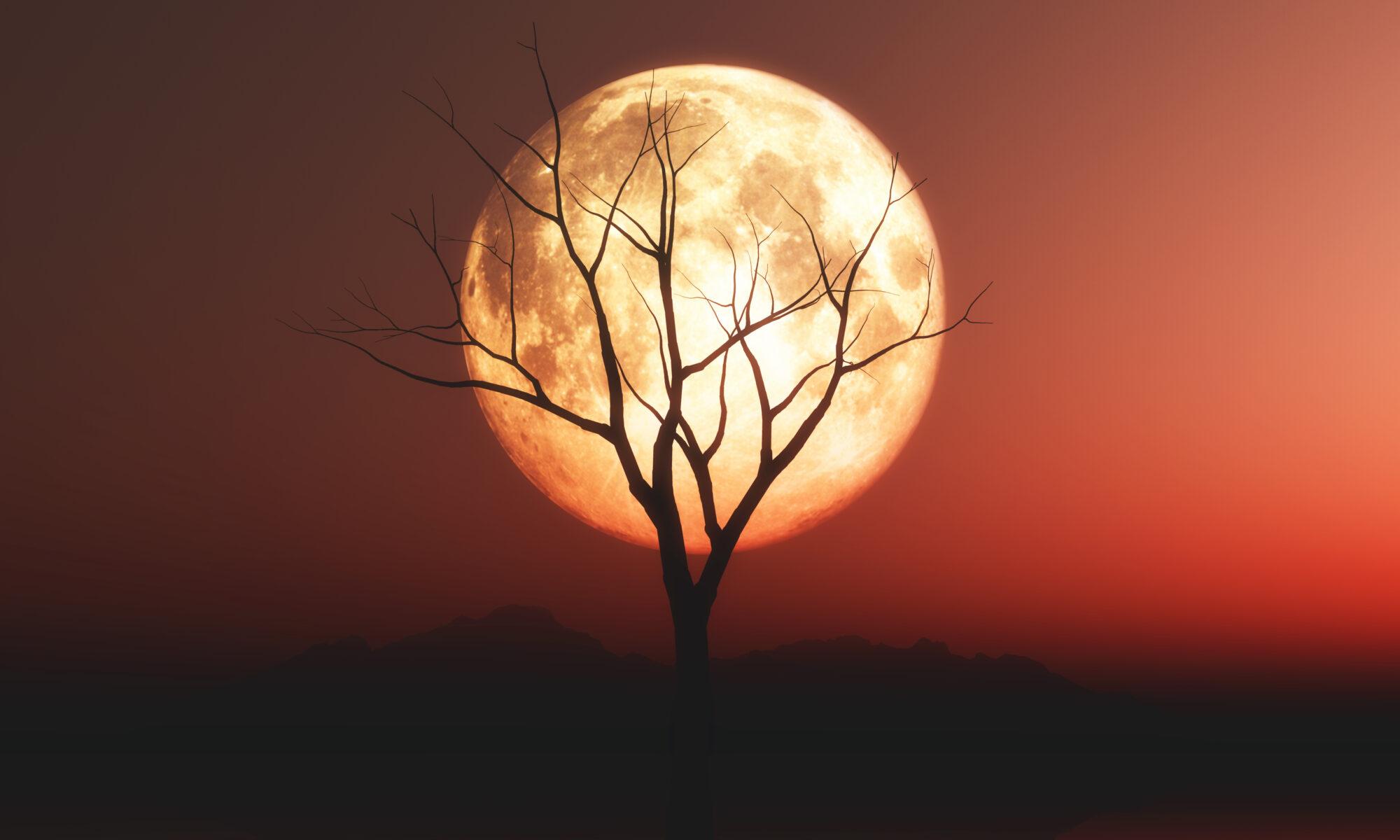 relationship should vibe like moonlight